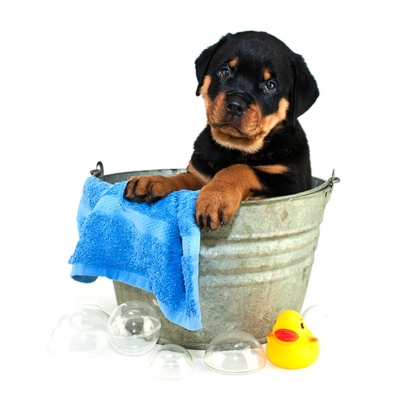 central bark dog grooming cute pup in soapy water