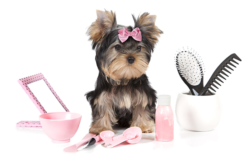 central bark dog grooming pup with brushes